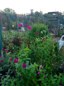 l-smith-community-garden-plot-1