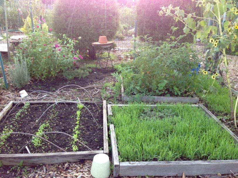 l-smith-community-garden-plot-2