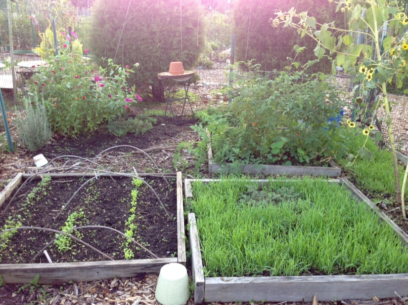 l-smith-community-garden-plot-2