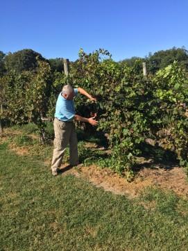 Ingleside Vineyard #2