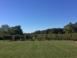 Ingleside Vineyard #3