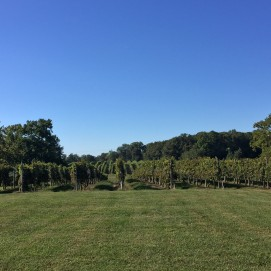 Ingleside Vineyard #3