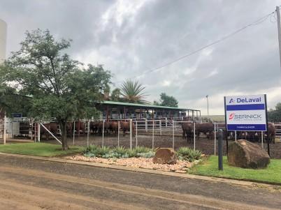 Bull testing station at Sernick Group
