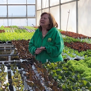 Mary Ellen talks about lettuce production in one of her greenhouses.